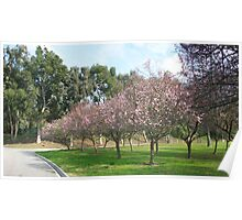 Spring Cherry blossoms .....welcomes You.! Poster