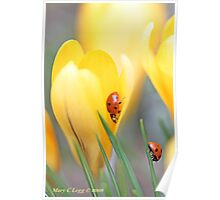 Ladybird beetles  on crocus. Coccinella septempunctata Poster