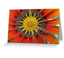 Gazania With Hoverfly Greeting Card