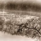 Misty River Morning 3 by photograham