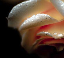 drizzle kiss'd by Geoffrey Dunn
