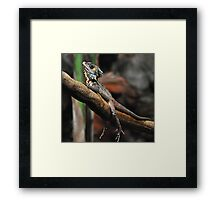 Now that's relaxed! Framed Print