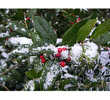 Holly in the Snow Photographic Print