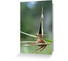 Shy butterfly Greeting Card