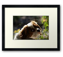 you can't rush genius, OK? Framed Print