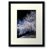 White Willow Framed Print