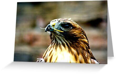 Hawk #1 by Trevor Kersley