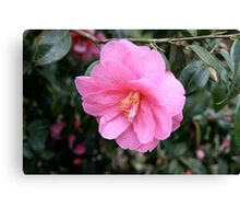 Another Pink Flower Canvas Print