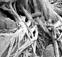 Rooted by Trip69