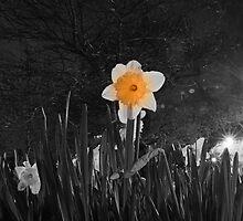 Still Shining by Richard Pitman