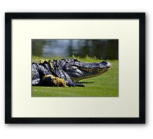 close up with gator Framed Print