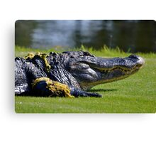close up with gator Canvas Print
