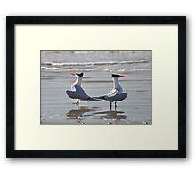 caspian terns doing the dance on beach Framed Print