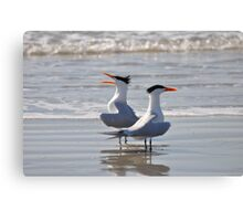 caspian tern singing on beach Canvas Print