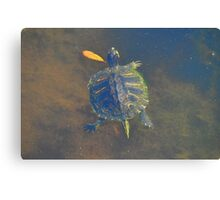 island turtle Canvas Print