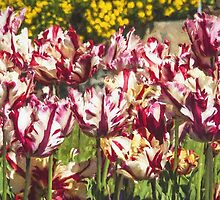 Tulips Galore by Marylou Badeaux