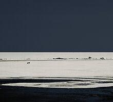 A Lonely Dog Run by Nikolay Semyonov