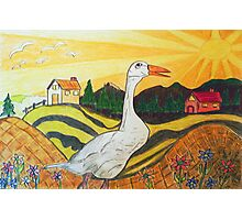 Duck Season - Could Be! Photographic Print