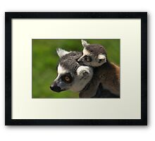 Ring-tailed Lemur with Baby Framed Print
