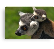 Ring-tailed Lemur with Baby Canvas Print
