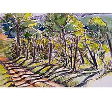 Vineyard, early morning. La Vigna Italy pen and wash 2010Ⓒ Photographic Print