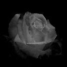 Dark with Beauty by saseoche