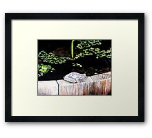 CHILLIN' AT THE LILY POND Framed Print