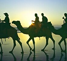 Camel train - Cable Beach, Broome WA by graphicscapes