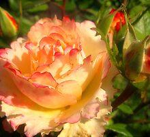 Such ruddy, like a peach ... by kindangel