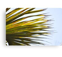 under a palm tree Canvas Print