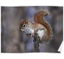 The Lookout / Red Squirrel Poster