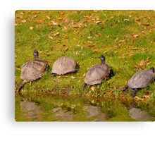 turtle party Canvas Print