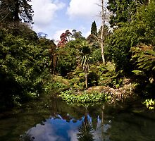 Cornish Jungle by SpencerCopping
