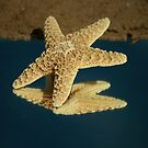 StarFish by terrebo