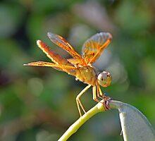 Resting Dragonfly  by Cody  VanDyke