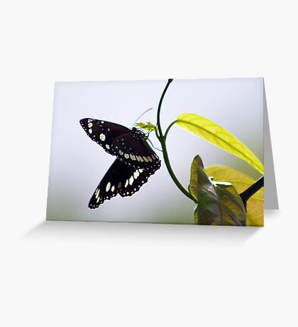 Looking for an Egg Site Greeting Card