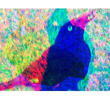 Hey Bird Photographic Print