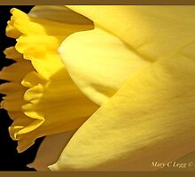 Jonquil A by pogomcl