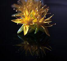 my favorite flower nr.2 by ser-y-star