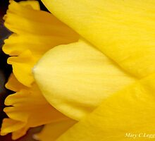 Portrait of a jonquil by pogomcl