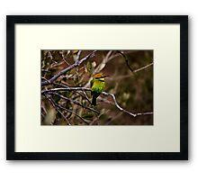 Rainbow Bee Eater Framed Print