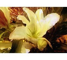 Lily for Gustav Photographic Print
