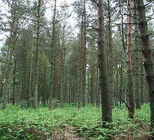 The woods by dswierczek