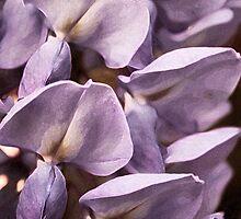 Purple by Evita