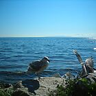 Seagull Guards the Pacific Ocean at White Rock by Jessica Friesen