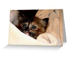 Kitty Wrap Greeting Card
