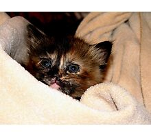 Kitty Wrap Photographic Print