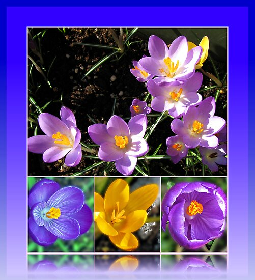 Spring Crocus Collage in Reflection Frame by BlueMoonRose