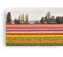 Tulip Town in the Skagit Valley Canvas Print
