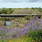 The Old Bridge by Nikki Collier
